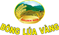 golden-rice-bong-lua-vang.png